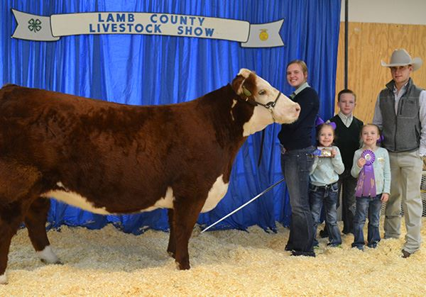 People with a prize-winning cow at the Lamb County Livestock Show
